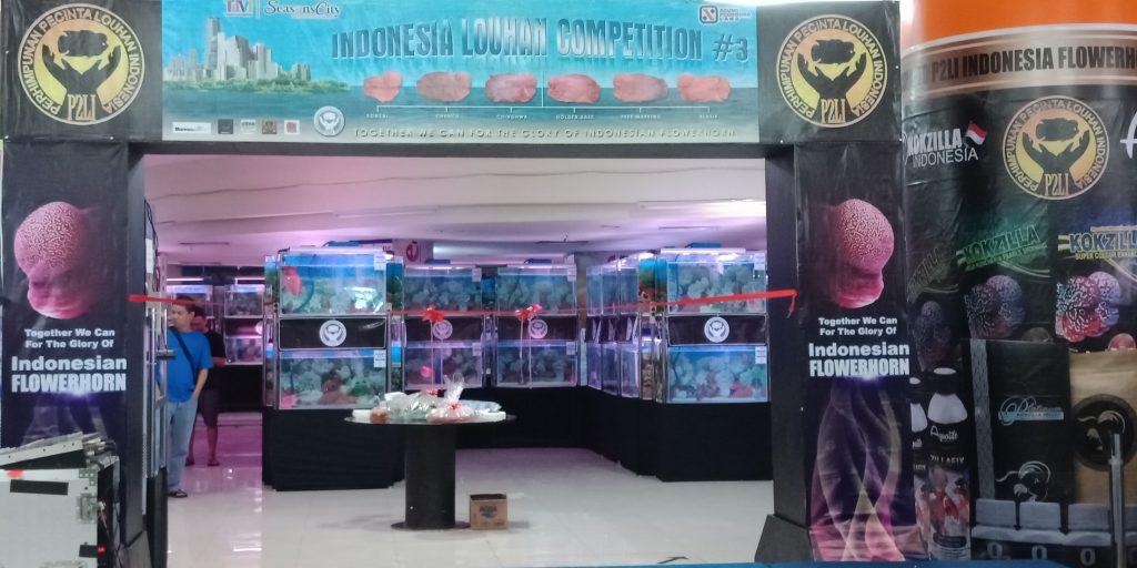kontes ikan louhan 2018