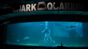 memberi makan hiu seaworld ancol