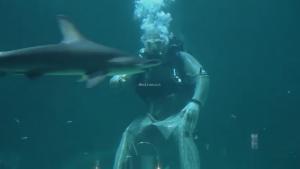 penyelam memberi makan hiu seaworld ancol